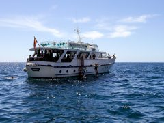 The Tina Boat during a Whale Watching Tour