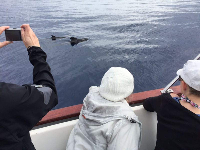 Pilot whales seen from the Tina boat