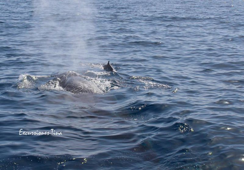 A Bryde's whale accompanied by a dolphin