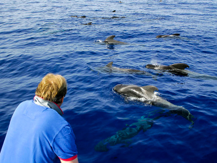 Pilot whales very close to the Tina boat