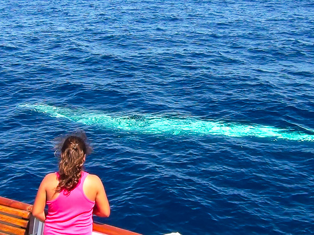 Bryde's whale close to the boat